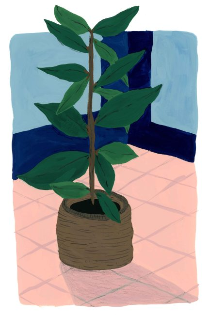Plant in Corner_lowres