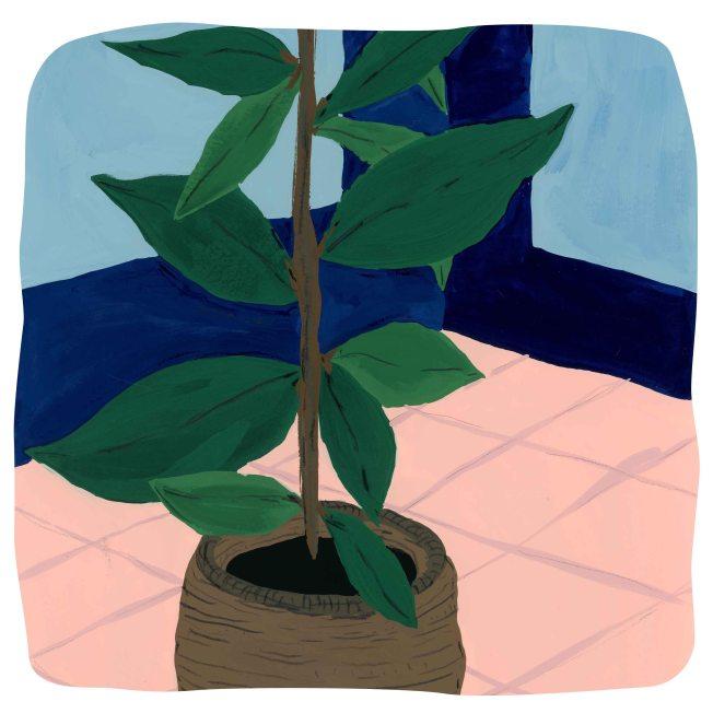 Plant in Corner_lowres_sq