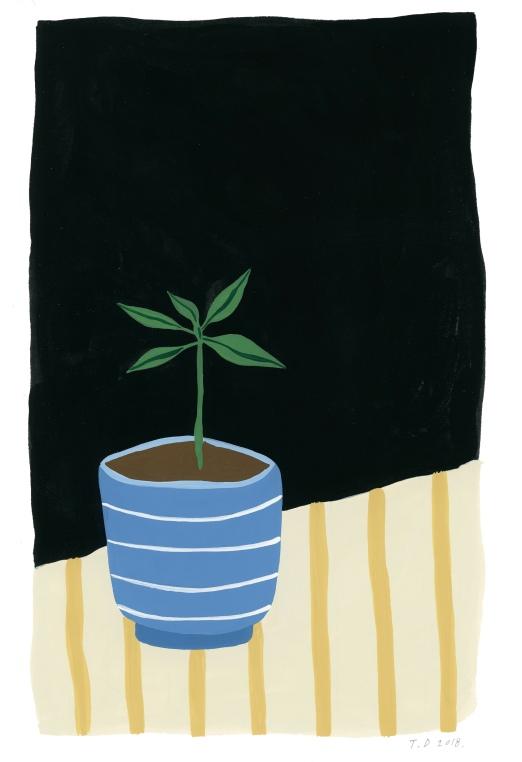 Avocado Plant_lowres_web